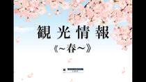 ■春の観光情報■