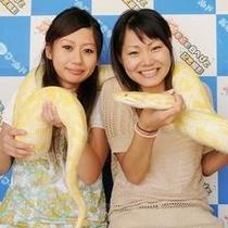 観光 おきなわワールド「ハブ公園の白蛇」