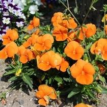 お庭には季節のお花