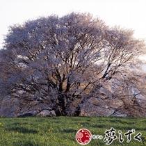 【春】一心行の大桜
