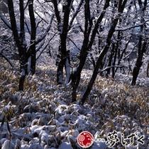 【冬】雪化粧