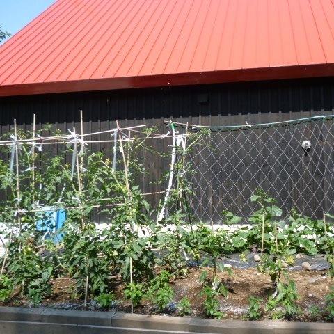 お野菜も育てています