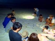 【周辺】ウミガメの孵化を見に行くナイトツアー!