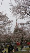 【八幡山公園】