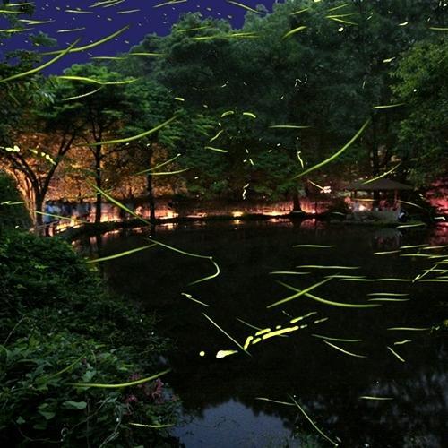 【6月上旬】伊豆大川『ほたる鑑賞の夕べ』