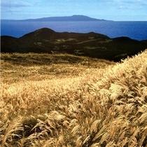 【10月上旬~11月中旬】『稲取細野高原』のススキ