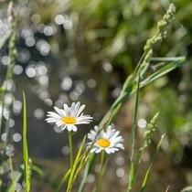 中尾温泉の春