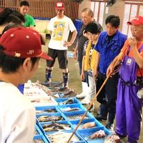 ご提供いたします鮮魚は毎朝直接市場から買い付けております