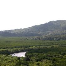 敷き詰められた緑の間を走る仲間川