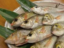 島で獲れた旬の魚をお召し上がりください