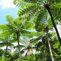 亜熱帯の植物一例