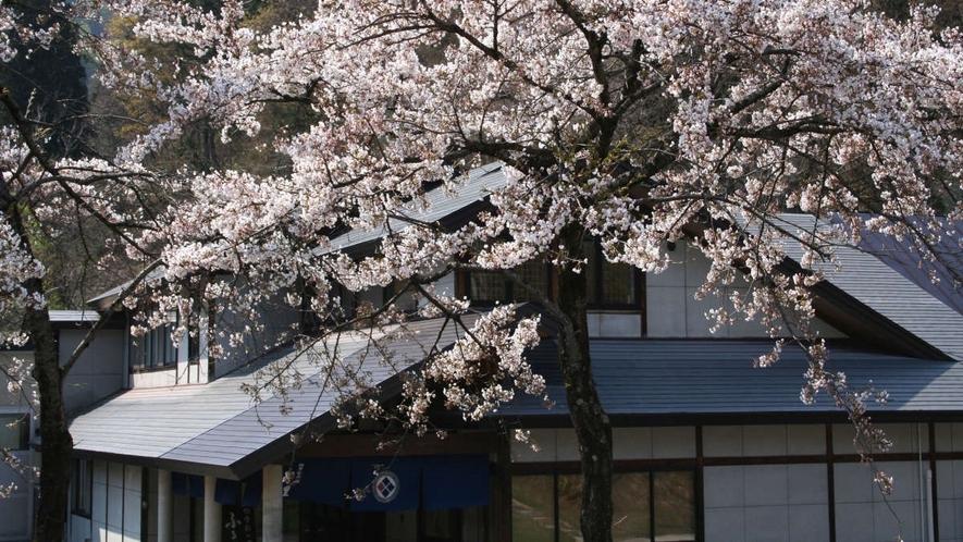 【周辺景観】玄関前には桜も咲きます。