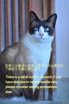 看板猫『たまちゃん』
