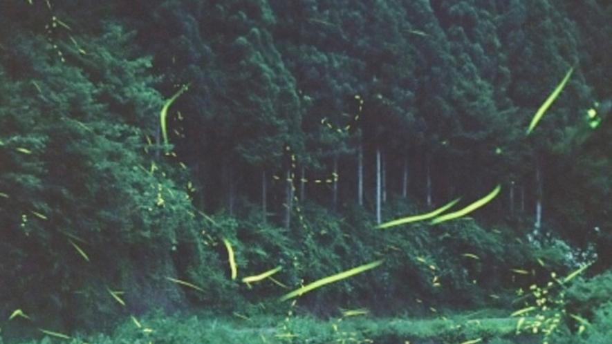 *【施設周辺】ホタル風景一例