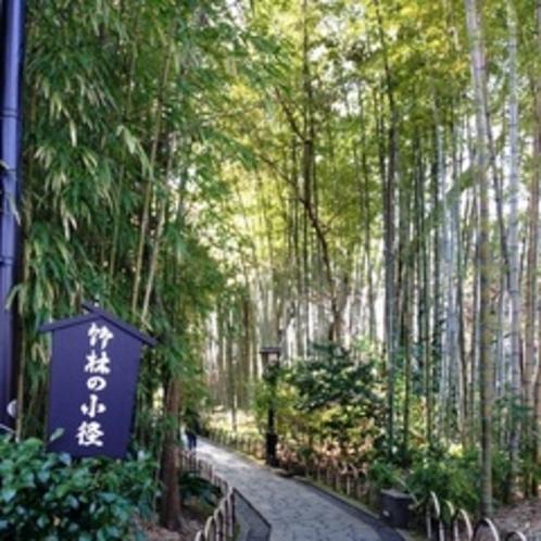 【周辺】竹林の小径