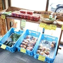 【朝市】その日の朝に採れた新鮮野菜を販売しております。