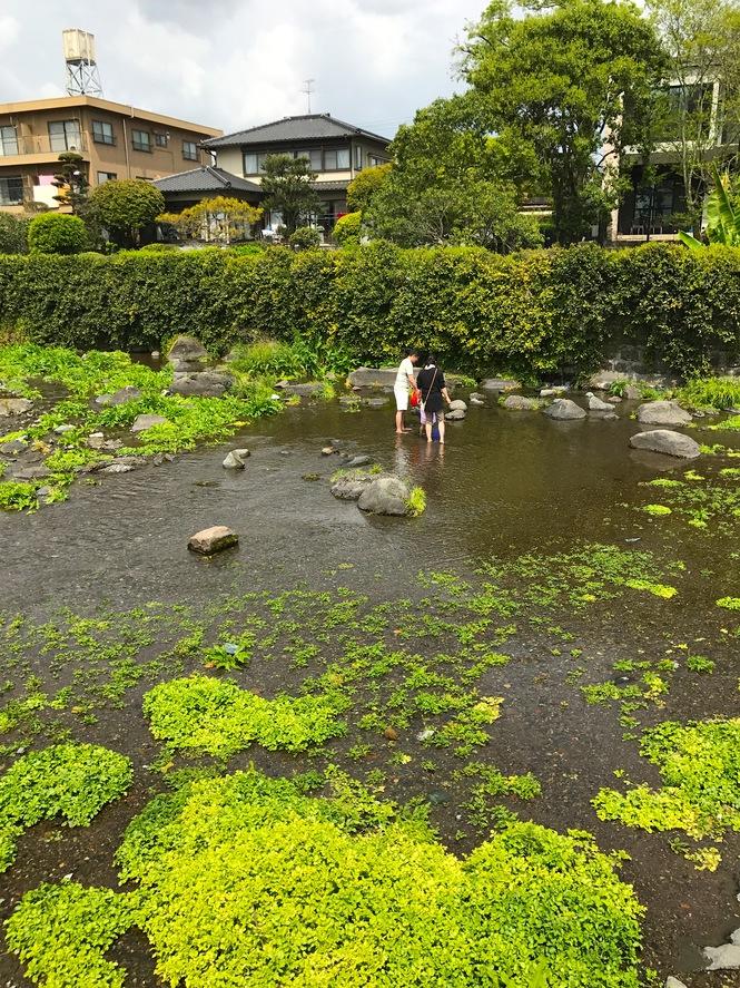 江津湖には小さいお子様でも安全に水遊びが出来る場所がたくさんあります
