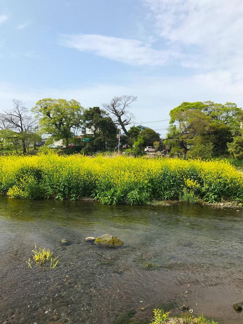 江津湖の風景