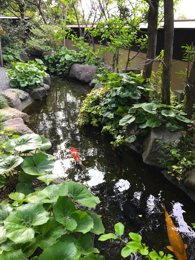 部屋から眺められる池
