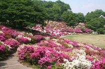 西山公園 鯖江市