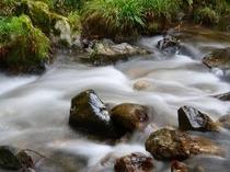 お風呂から望める渓流