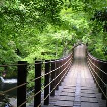 汐見滝と吊橋(当館よりお車で約15分)