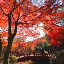 熱海梅園の紅葉は日本一遅い紅葉とも言われ、四季を通して楽しむことができます