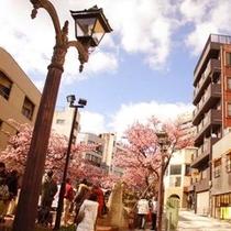 糸川桜まつり 毎年1月下旬から2月中旬まで早咲きの熱海桜を見ることができます