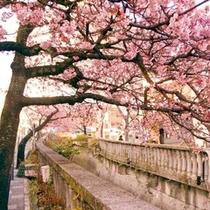 糸川桜まつりは梅園梅園の梅のころに咲くため同時に花見を楽しむことができます