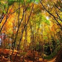 【安城駅前】紅葉といえば香嵐渓です☆