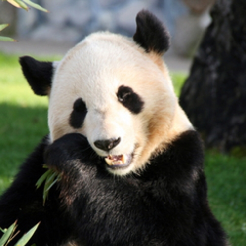 上野と言えばやっぱりパンダです