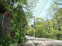 【東山温泉の新緑】新緑の季節にはたくさんの野草が花開き1年で最も美しい季節です