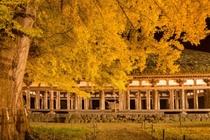【新宮熊野神社 長床】樹齢800年の大イチョウとのコラボが美しい。(当館より車で約50分)