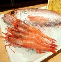 新潟の魚◆岩舟漁港などから、直接板長が仕入れております。