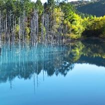 【車で約35分】青い池