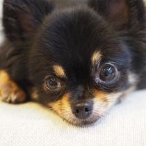 川添支店は家族の一員のペットと一緒に泊まれる宿です!