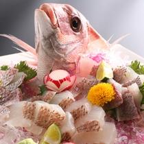 【春の訪れを告げる桜鯛】