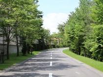 正門からホテルまで続く並木道