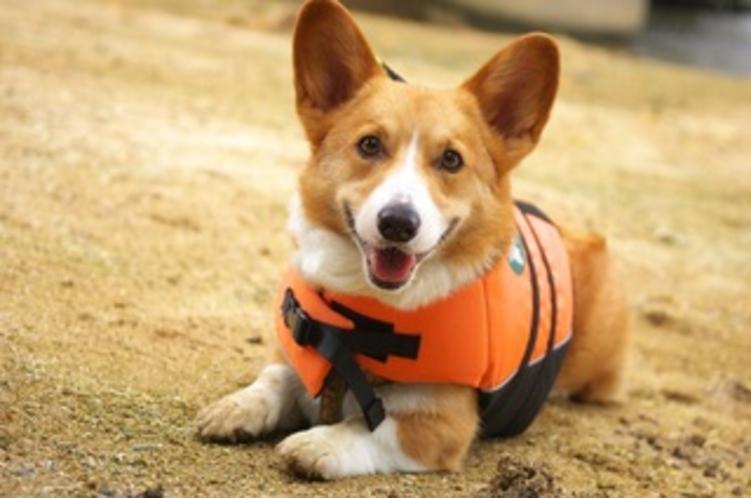 愛犬と一緒にマリンスポーツ満喫!