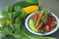 地もと野菜のフレシュサラダ