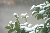 山樹庵 冬