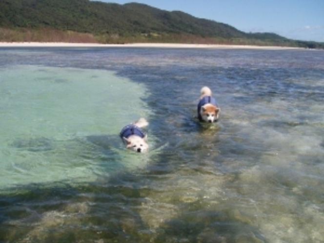サンゴ礁の海から見た砂浜