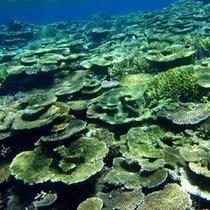 *【周辺景観】鮮やかなブルーの西表島の海中。いろとりどりの魚たちの楽園です。