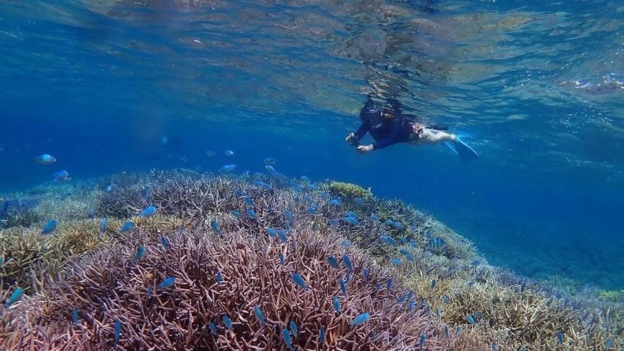 *透き通った水中世界をお楽しみください!