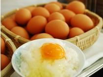 地元・吉良町で生産されている「ランニングエッグ」