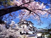 桜の彦根城