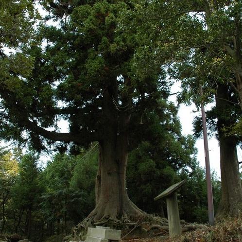 """琵琶湖八景 """"煙雨 比叡の樹林"""""""