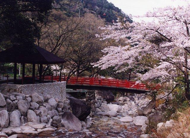 大石公園の桜