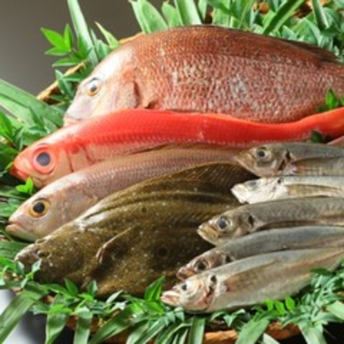 新鮮な地魚