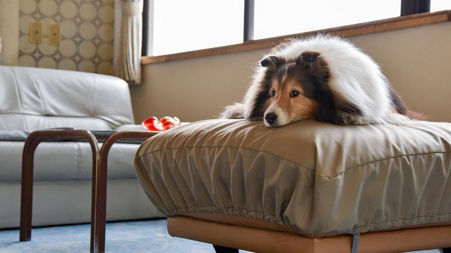 *【看板犬】ロビーのソファがお気に入り♪